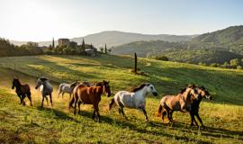 Italy_Umbria_Reschio_Estate_main_banner_fivestardestination_five_star_destination